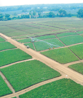 tl-linear-irrigation
