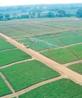 tl-linear-irrigation